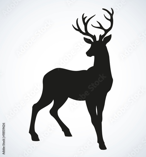 Young deer antlered. Vector drawing Wall mural