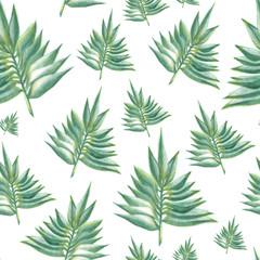 fototapeta zielone liście paproci na białym tle