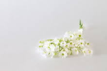 Bouquet Of Small White Flowers On A Light Background