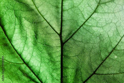 Türaufkleber Makrofotografie macro green leaves