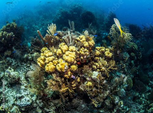 Staande foto Koraalriffen Belize Scuba Diving