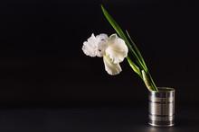 Big White Flower Iris In A Tin On A Black Background