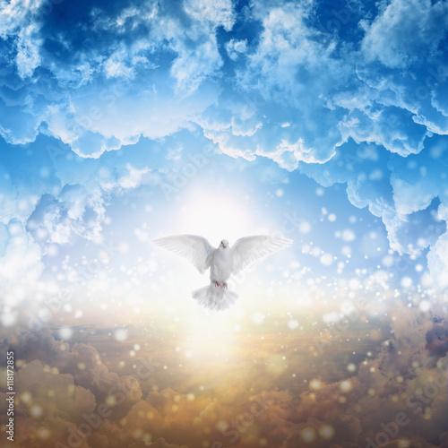 Spoed Foto op Canvas Bar White dove descends from heaven