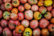Bad Tomatoes