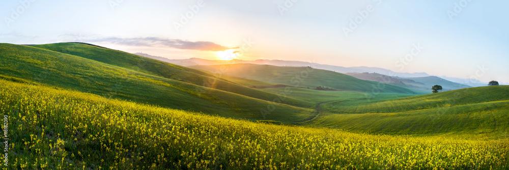 Fototapety, obrazy: The green field Tuscany Italy
