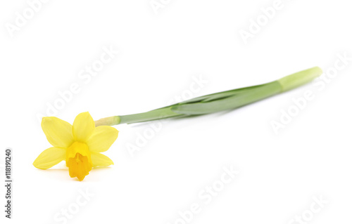 Deurstickers Narcis Yellow narcissus flower isolated