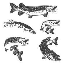 Pike Fish Icons. Design Elements For Fishing Club Or Team.