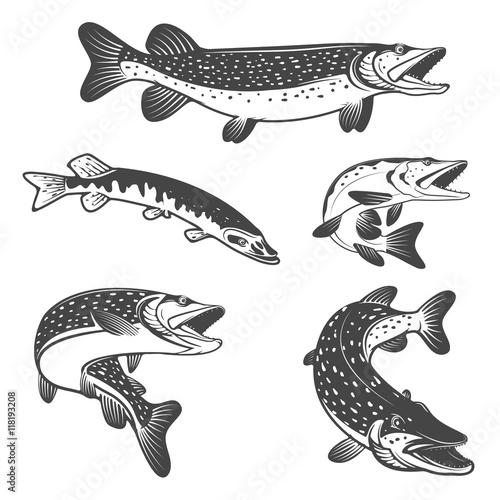 Fotografie, Obraz  Pike fish icons. Design elements for fishing club or team.