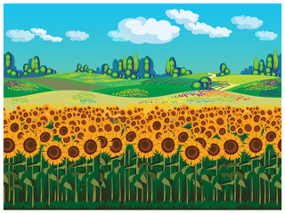 FototapetaScenic landscape with sunflowers