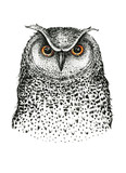 Hand drawn black white illustration owl fly bird. Art Coloring - 118226225