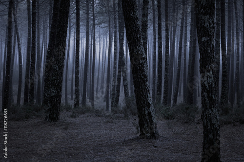 Photo  Dark foggy forest