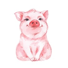 Funny Pig. Cute Watercolor Ill...