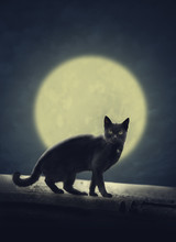 Black Cat And Full Moon