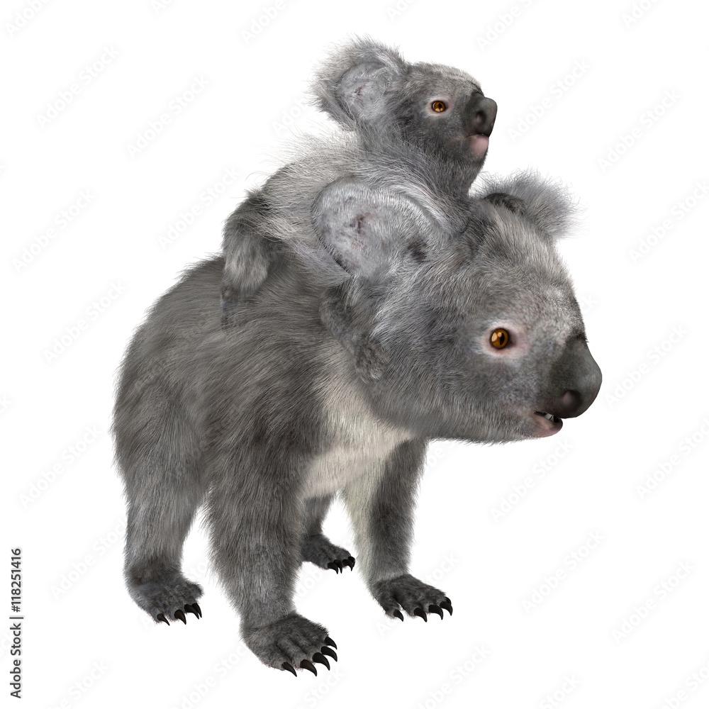 3D Rendering Koala Bears on White