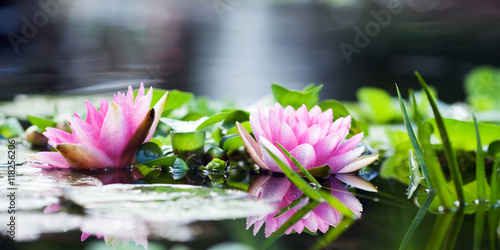 Aluminium Prints Water lilies Lily on the water