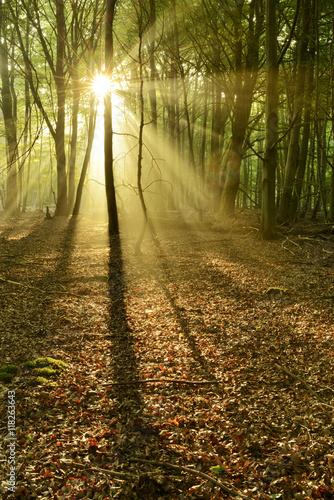 naturalny-las-bukowy-i-debowy-oswietlony-promieniami-slonca-rozproszonymi-przez-mgle