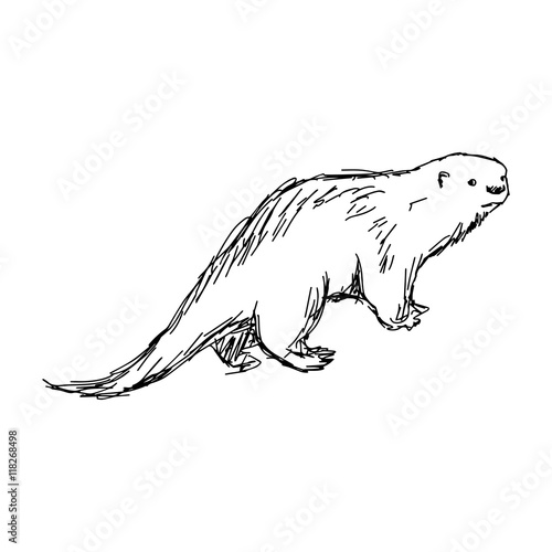 illustration vector hand drawn sketch of African Clawless Otter Poster