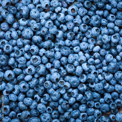 Fototapety, obrazy: Blueberries close up