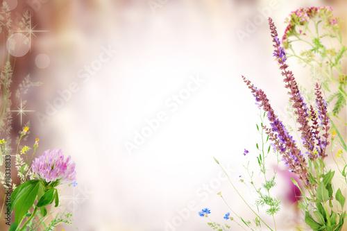 Foto op Canvas Lavendel Beautiful wildflowers frame design. Pastel blurred background.