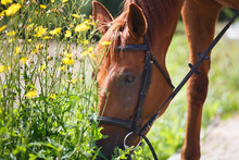 The Horse Feeding The Wildflowers