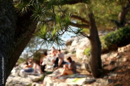 Fotografie, Obraz  Pine tree on the beach