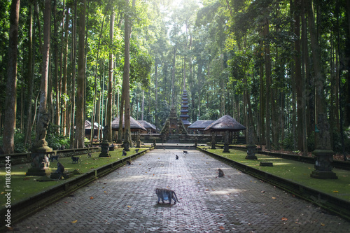 Photo sur Toile Singe Sangeh monkey forest,temple on Bali island,Indonesia