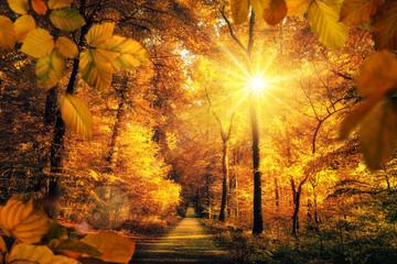 Panel Szklany Optyczne powiększenie Goldener Herbst mit viel Sonne im Wald lädt zu einem Spaziergang ein