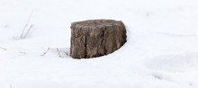 Old Tree Stump In Snow In Winter