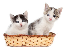 Two Kittens In A Basket On A W...