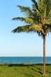 A coconut tree on tropical beach, on grass, on a vivid blue sky