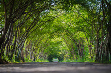 Road With Tree Tunnel In Thailand