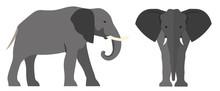 Elephant Flat Illustration. Vector