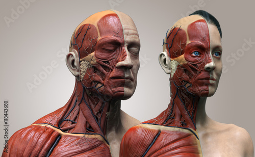 Human anatomy background , male and female , muscle anatomy