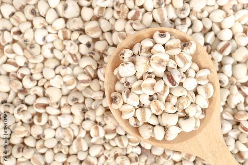 Valokuva  Job's tears on wooden spoon with Job's tears on the background, Job's tears, Millet grains, Organic