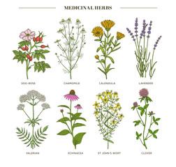 Panel Szklany Przyprawy Medicinal herbs.