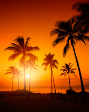 Golden Sky With Palm Trees Tro...