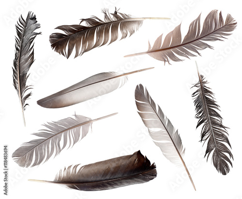 Collection of feathers isolated on white background