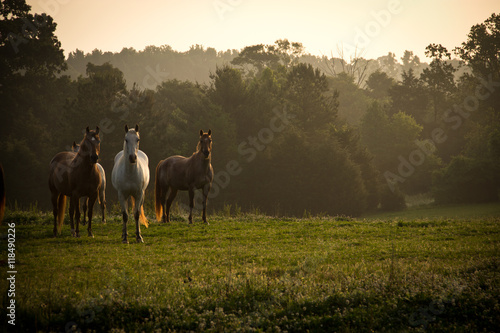 Staande foto Paarden Wild horses in the mountains at sunrise
