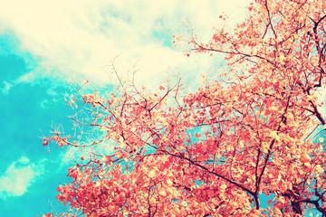 Fototapeta Do salonu Vintage autumn leafs in a tree
