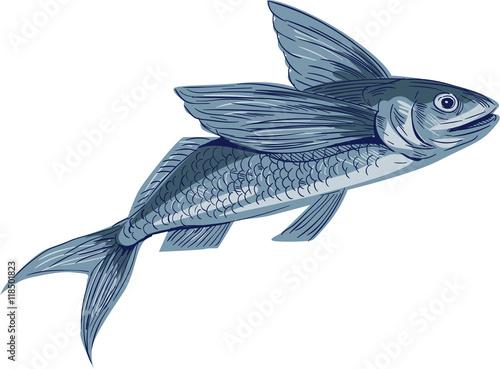 Stampa su Tela Flying Fish Drawing
