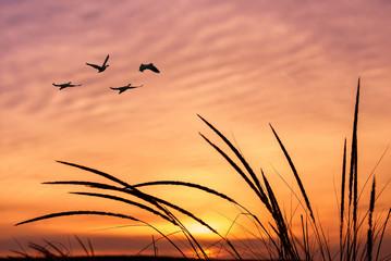 Fototapeta Ptaki Orange sky on sunset or sunrise with flying birds