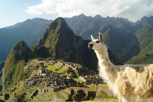 Photo  a llama and on the background the ruins of Machu Picchu, Perú
