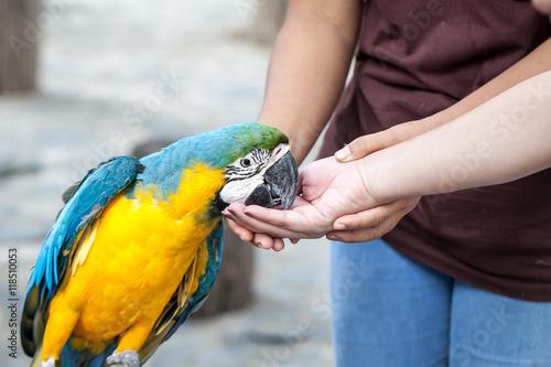 Valokuva Feeding the parrot by hand