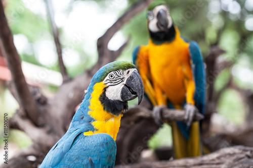 Valokuvatapetti colorful parrot in garden