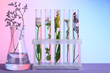 Flowers And Plants In Test Tubes On Wooden Background. The Concept Of Biological Research
