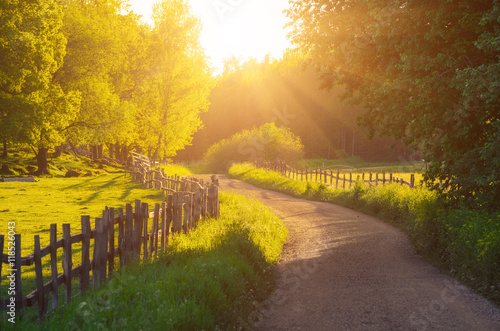 Poster Melon Rural Sweden summer sunny landscape with road, green trees and wooden fence. Adventure scandinavian hipster concept