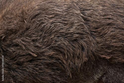 Canvastavla Wild boar (Sus scrofa). Skin texture.