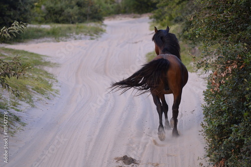 Photo  Wild horse of Outer Banks,NC