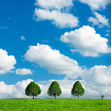 Three Trees On The Horizon, Spring Landscape Under Blue Sky