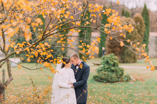 Fototapeta Charming newlywed pair embracing in the beautiful autumn park under tree with yellow leaves obraz na płótnie